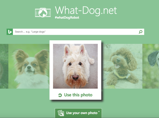 This Site Tells You What Kind Of Dog You Are