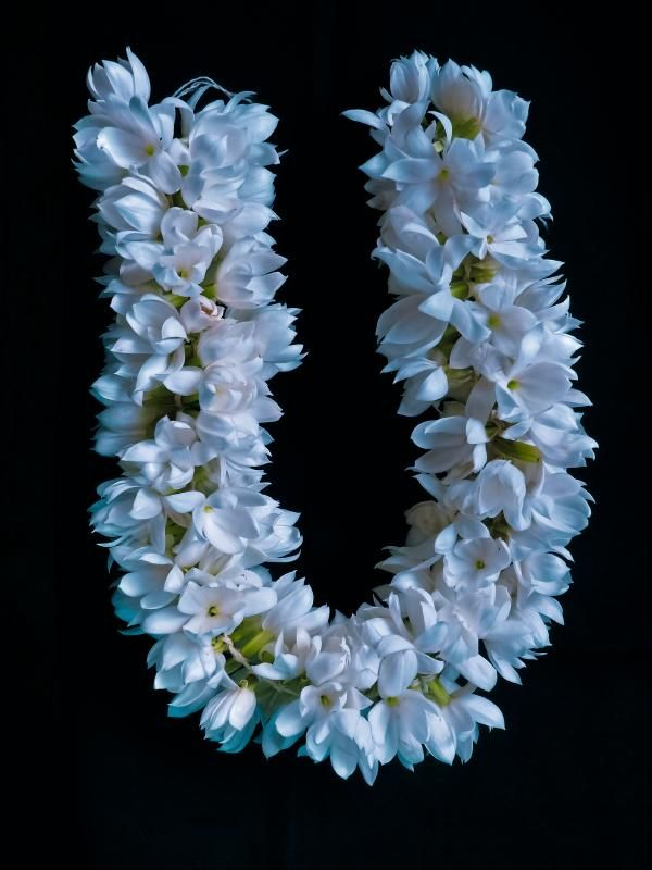 Symbolic And Spiritual Meaning Of Jasmine Flowers | Indian