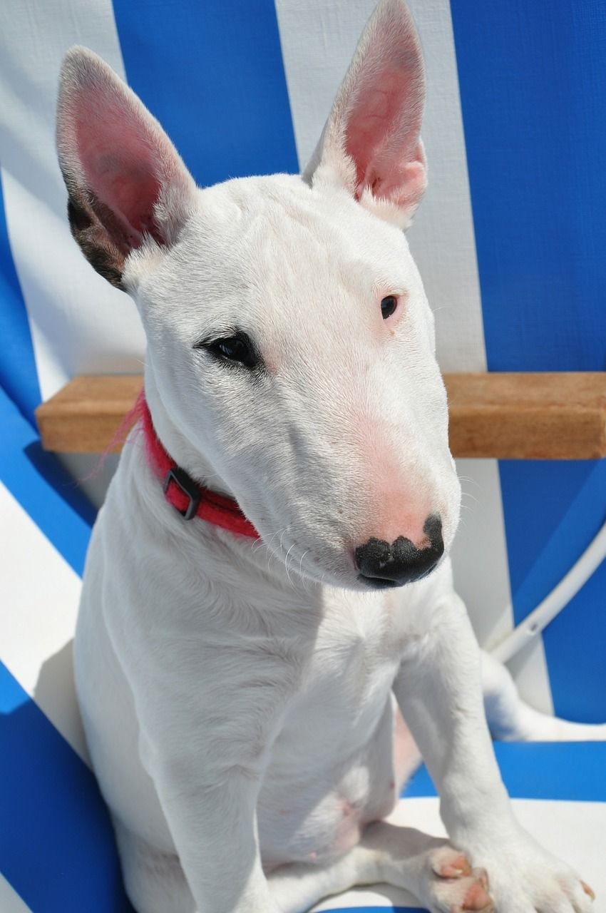 Dog Reviews His Sticks Like They Re Fine Wines And We Are Impressed Bull Terrier Puppy Puppy Training Pitbull Puppy