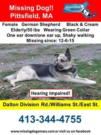 print Missing Elderly Female German Shepherd (Pittsfield ...