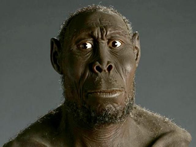 Картинки по запросу Homo Rudolfensis