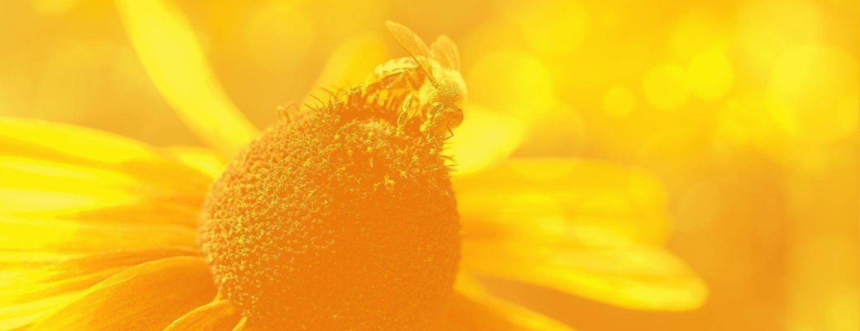 Kelley Beekeeping | Honey Bees | Bee keeping, Beekeeping