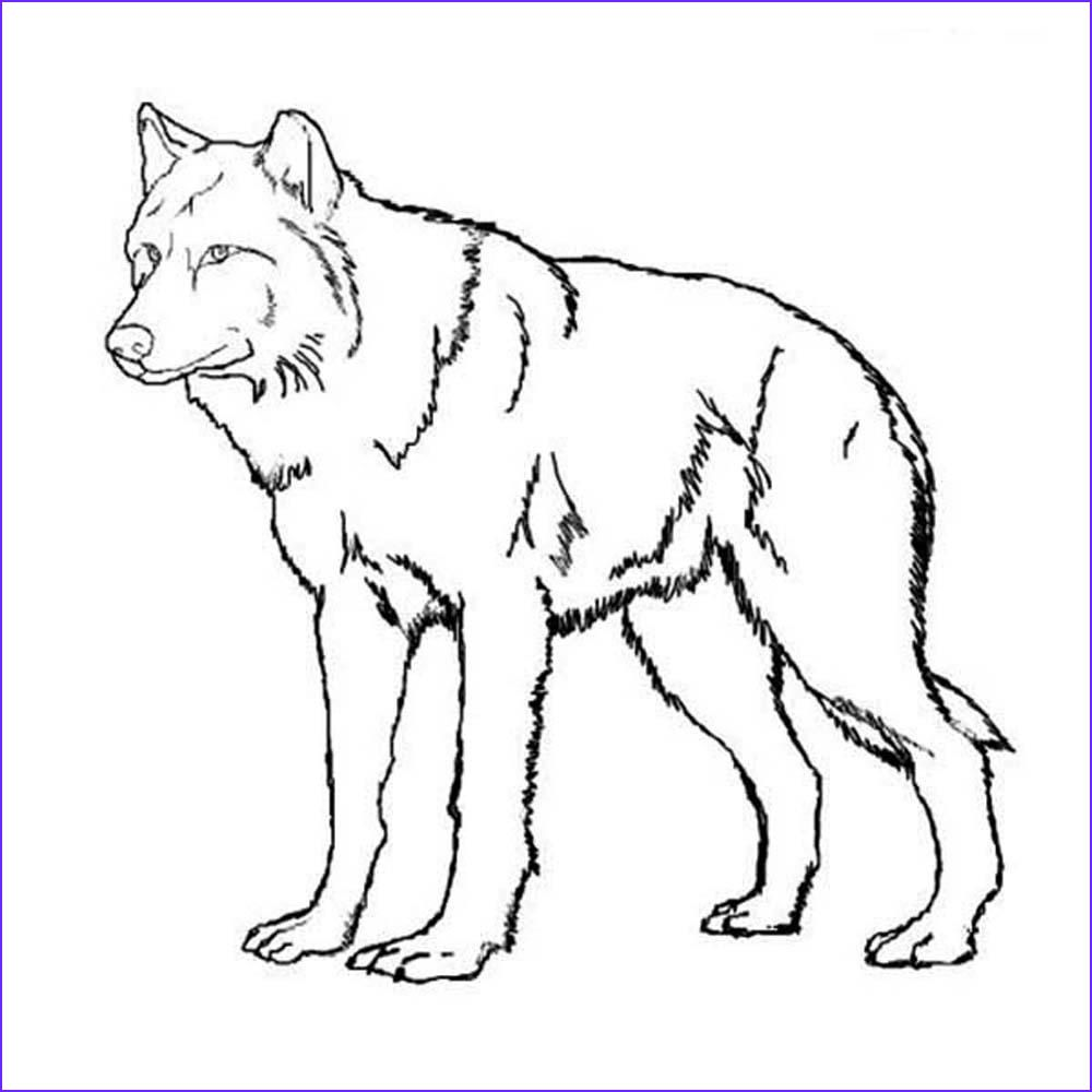 Wolf Coloring Pages Printable Free Printable Wolf Coloring Pages
