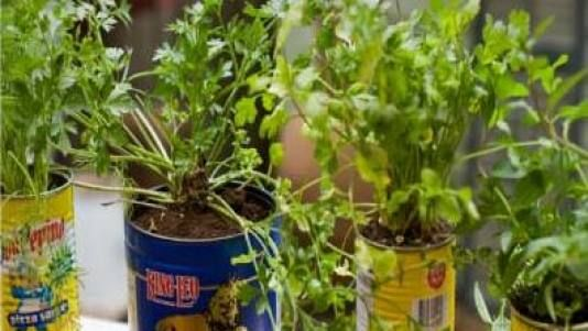 Herb pots, lots and lots of herb pots! At 15-months of age, my sweet granddaughter waters her herbs daily. I LoVe LoVe LoVe to cook with fresh herbs, daily! I have lots of pots on my back porch. A PERFECT gift for me would be pots of unusual herbs!