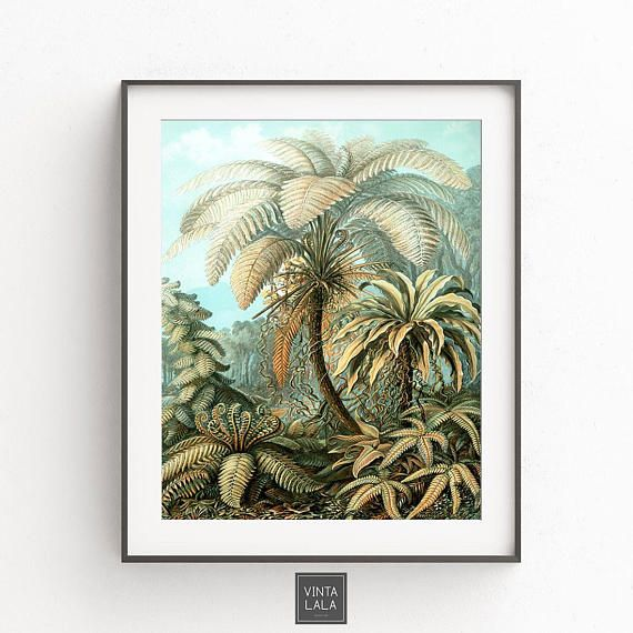 Palm Tree Print, Palm Leaf, Tropical Wall Art, Tropical Decor, Ernst  Haeckel, Vintage Wall Art, Digital Download, Instant Download,Palm Leaf  Posteru2026