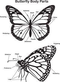 Monarch Campaign Kids Corner Monarch Butterfly Butterfly Project Monarch