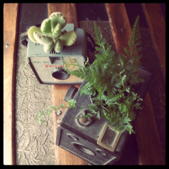 Finished DIY Camera-Planters.  :)