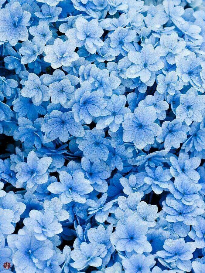 pinterest octwilight Flower aesthetic, Blue flowers