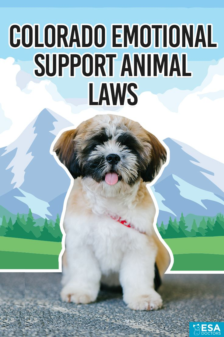 Colorado Emotional Support Animal Laws Animal law