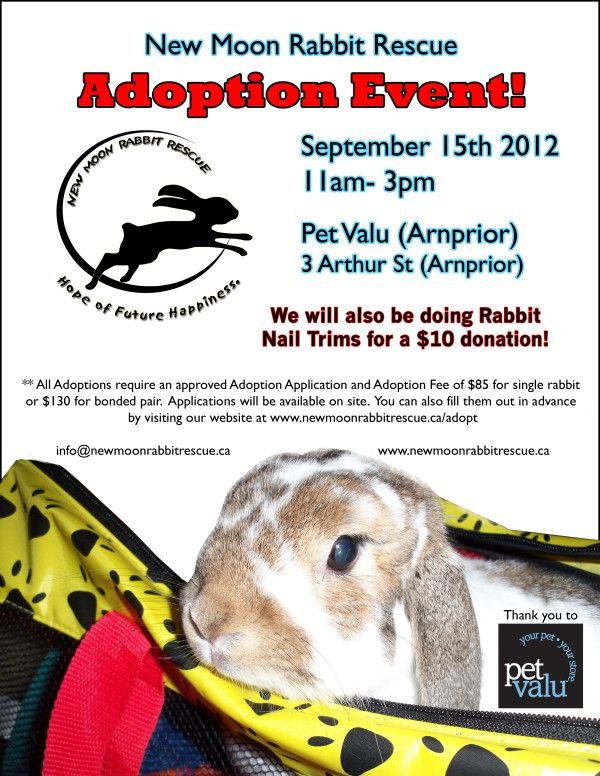Are Our Adoption Events Usually Too Far This May Be Your Lucky Weekend Come See Us The Bunnies In Arnprior Come See Us Nmrr Events Adoption Bun