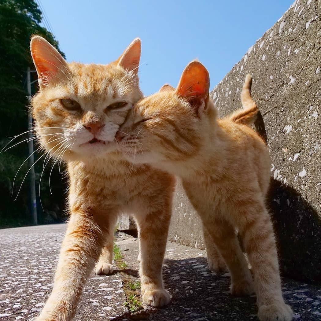 NEW Tee Shirt I Speak Fluent Cat BIO Animal Cute Pet Miaou Chat Love Enjoy
