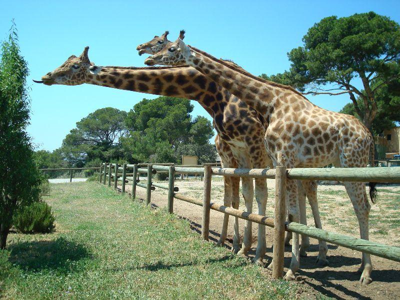 Les visiteurs sont invités à passer un moment de détente et observer de une grande diversité d'espèces d'animaux en captivité dans ce parc adapté pour le confort de tous.