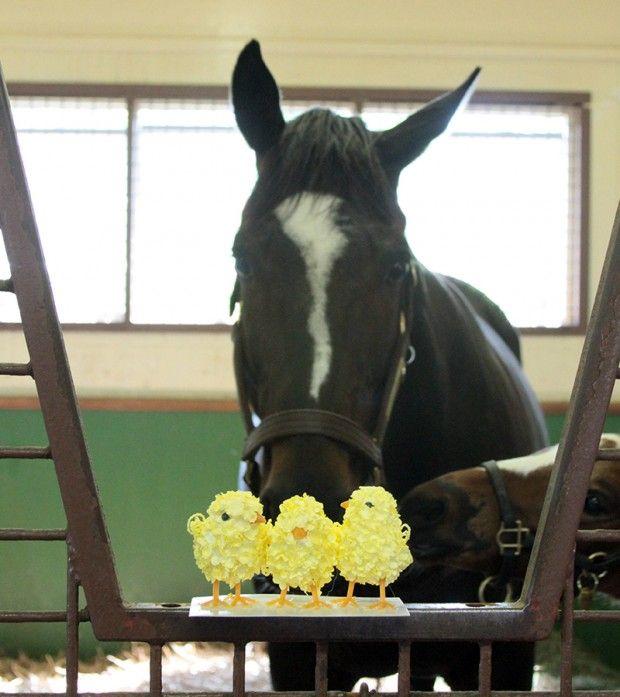 Spring Holidays And Celebrations Horses Beautiful