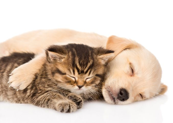 It S Naptime Bestfriendsforever Snuggle Puppy Kitten