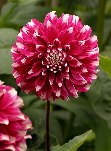 Pin On Bloomin Beauties