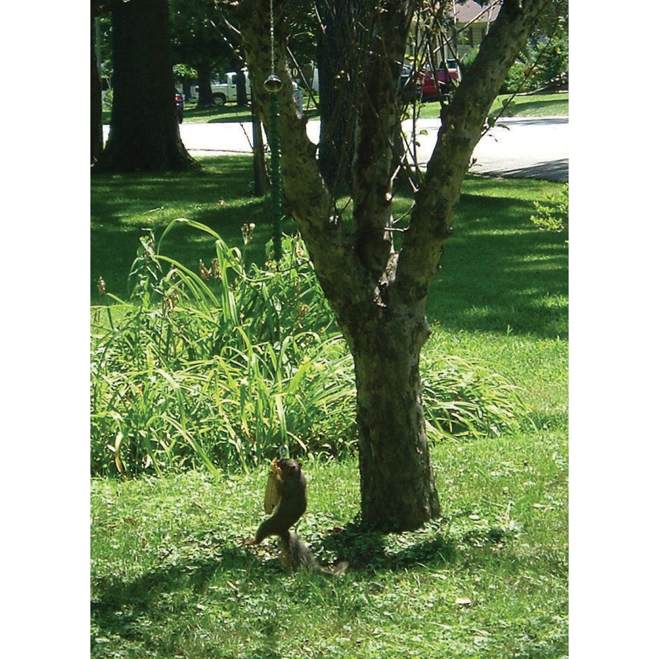 Deluxe Squngee Squirrel Bungee Feeder - Ace Hardware | Lawn and garden, Wild bird feeders, Squirrel