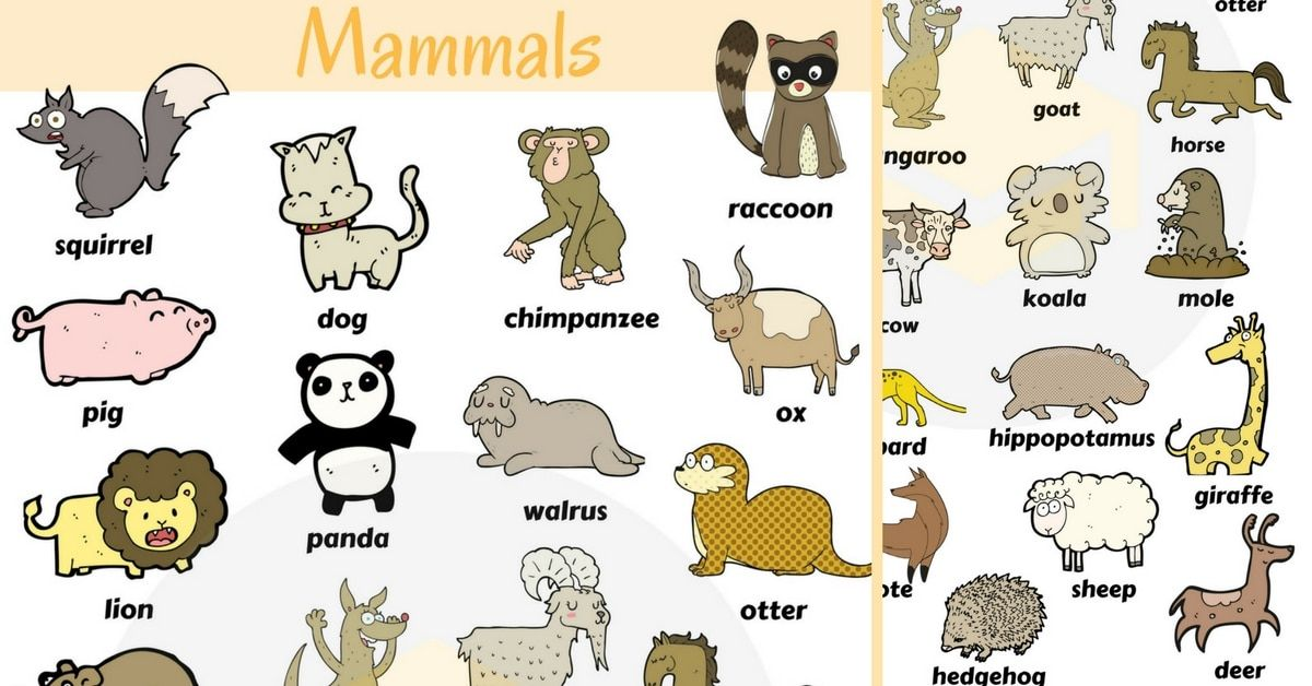 287shares Mammals Are One Of The 6 Main Classes Of Animals Mammals Are Any Vertebrates Within The Class Mamma Mammals Animals Name In English Animals For Kids