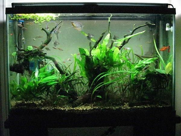 45 Gallon Tall High Tech (With images) | Live plants ...