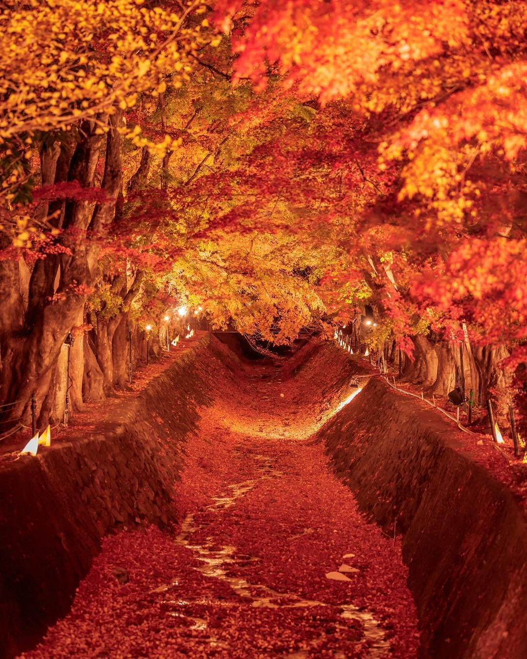 fall-yamanashi, japan   travel   pinterest   yamanashi and japan