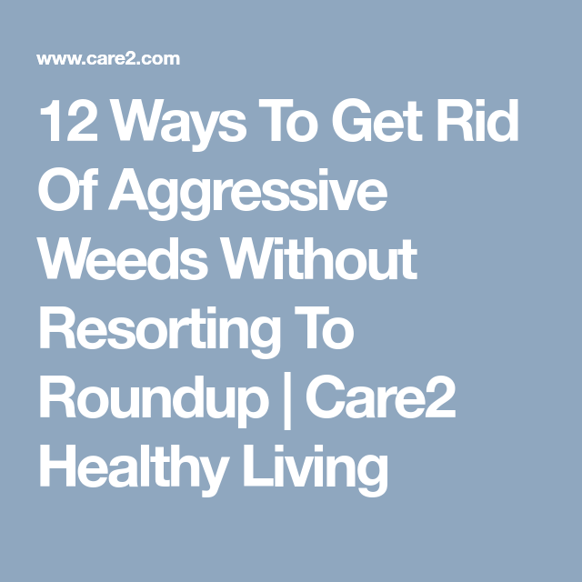 12 Ways to Get Rid of Aggressive Weeds Without Resorting