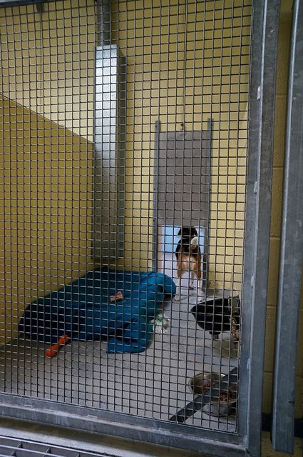 Housing Description Double Sided Indoor Indoor Kennel What We Love Spacious Double Sided Kennel With Guillotine Door Nice Comfortable Bed Note This Canil