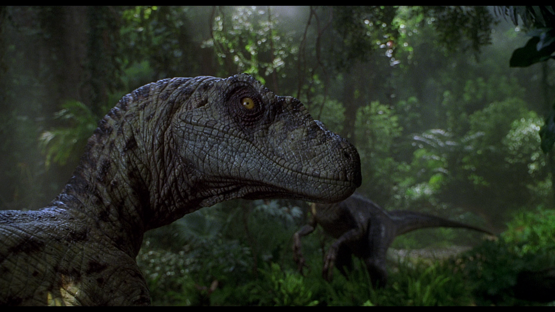 Jurassic Park Wallpapers Wallpaper