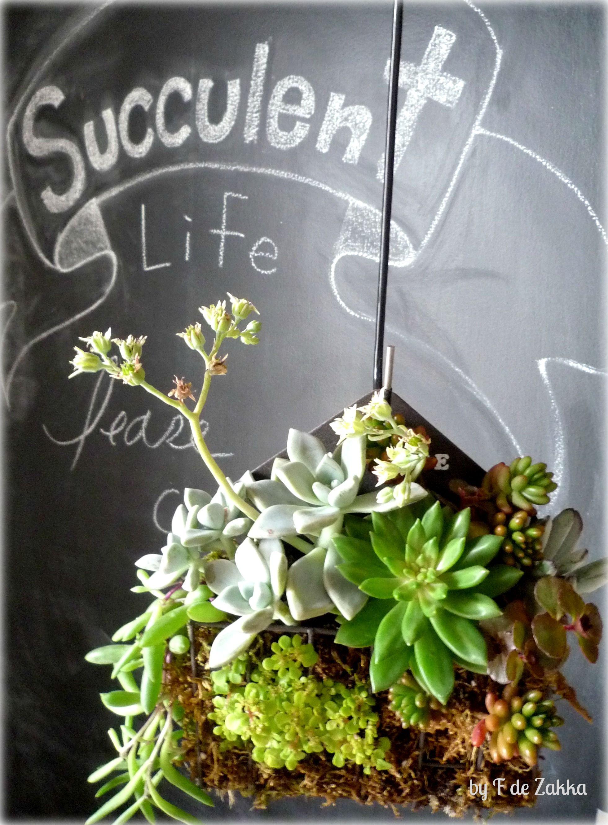 Succulent Arrengment