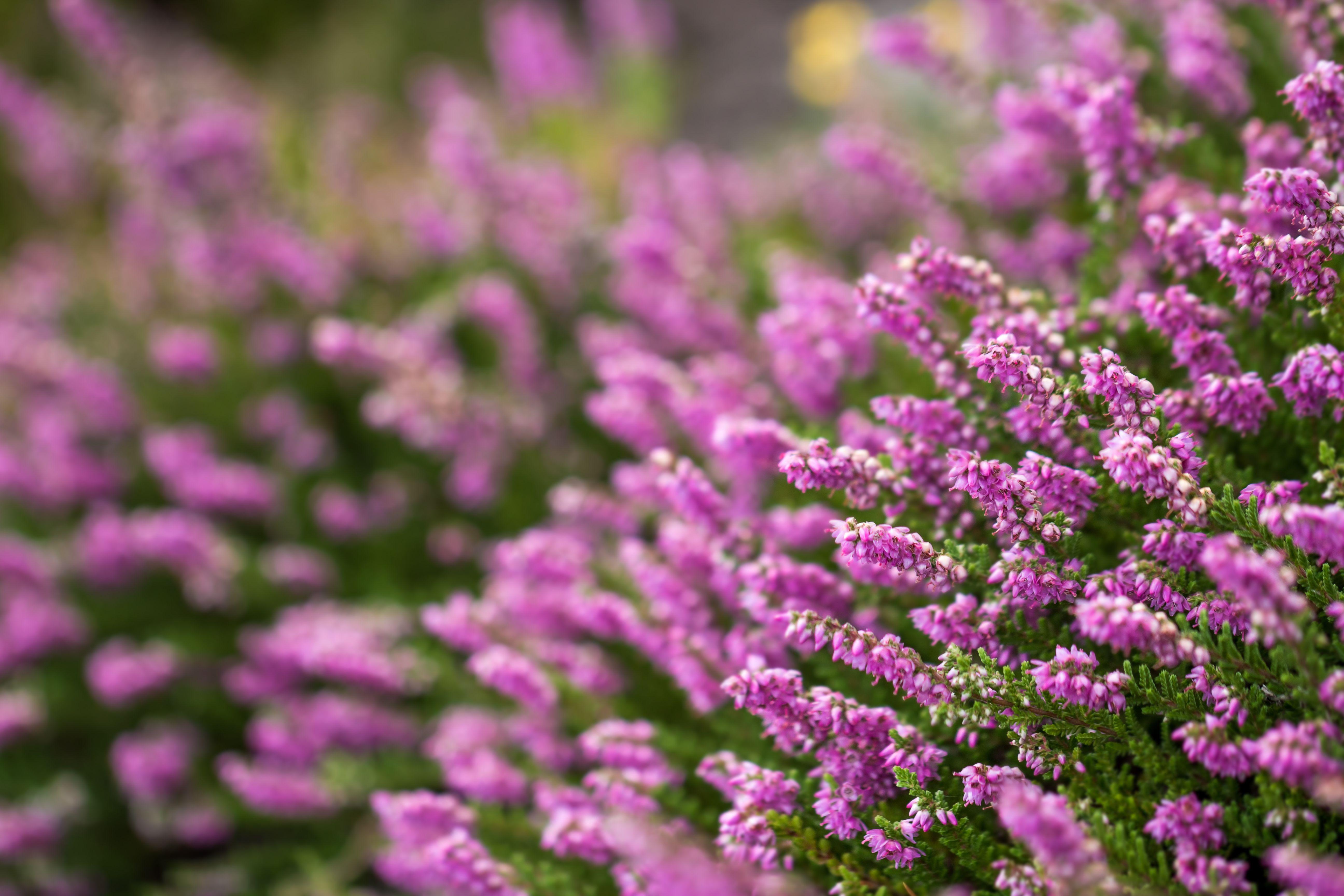 Jakie Kwiaty Kwitna Jesienia Fall Flowers Beautiful Blooms Plants