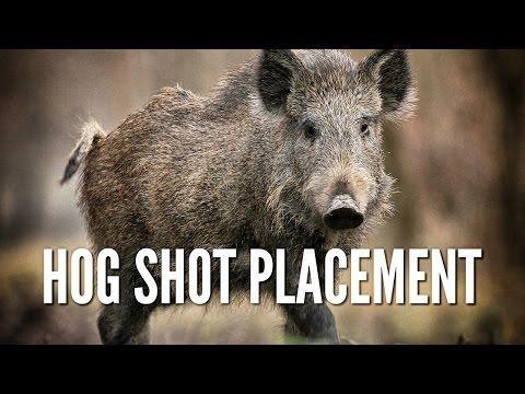 ▷ Wild Hog Shot Placement - Hog Anatomy - YouTube | Hog Hunting ...