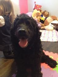 Archie is an adoptable Cocker Spaniel Dog in Cincinnati, OH. Meet Archie! Archie is a 5 year old male Cocker Spaniel. He is a very friendly dog that is great with other dogs and kids. He loves to be c...