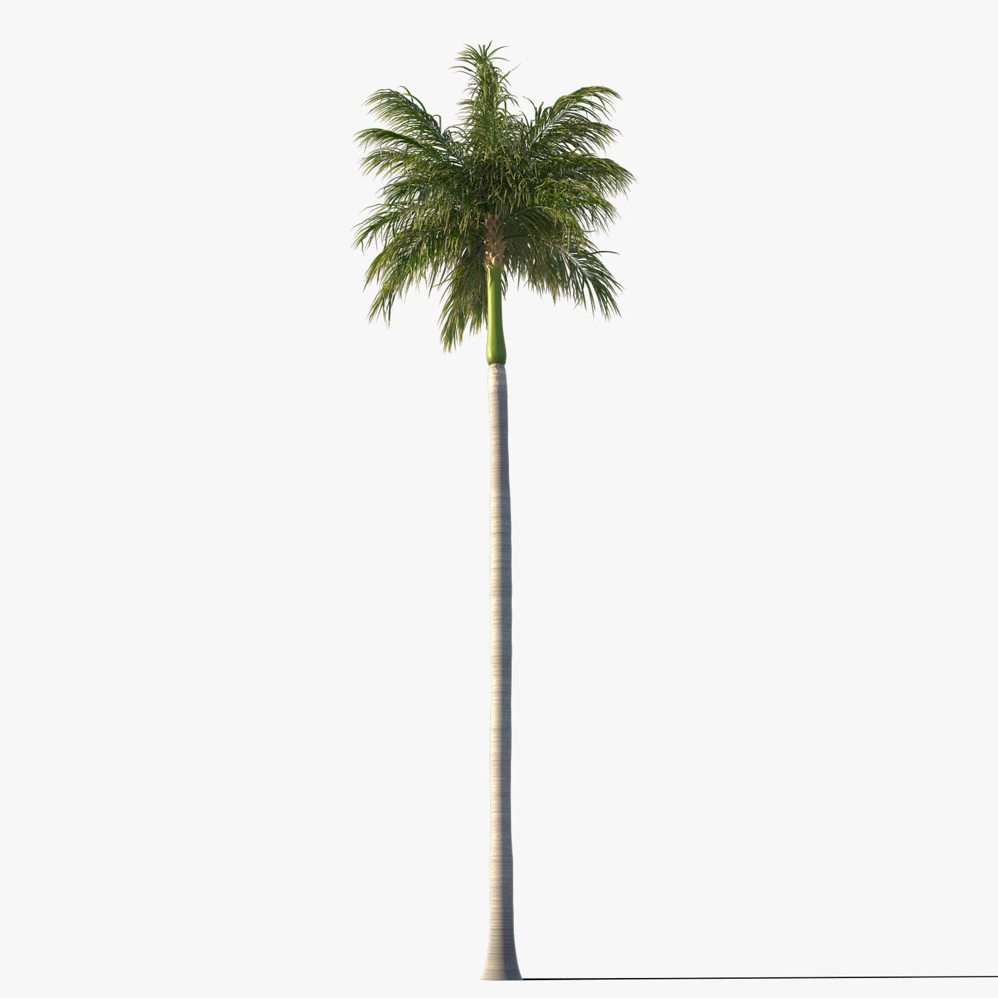 Group of Palm Plant Tree 3D