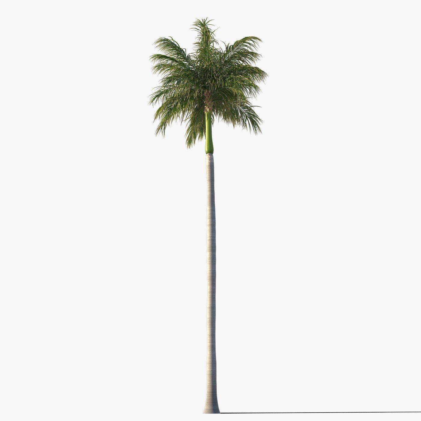 royal palm tree 3d model | Florals | Palm trees, 3d
