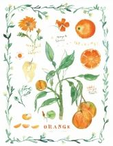 Lucile Prache Illustrations #Delicious  #foodillustration #menu #herbs #ingredients #recipeillustrations #cooking #homecooking #chefspecial #trafficnyc #wallart #orange #oranges http://www.traffic-nyc.com/food/