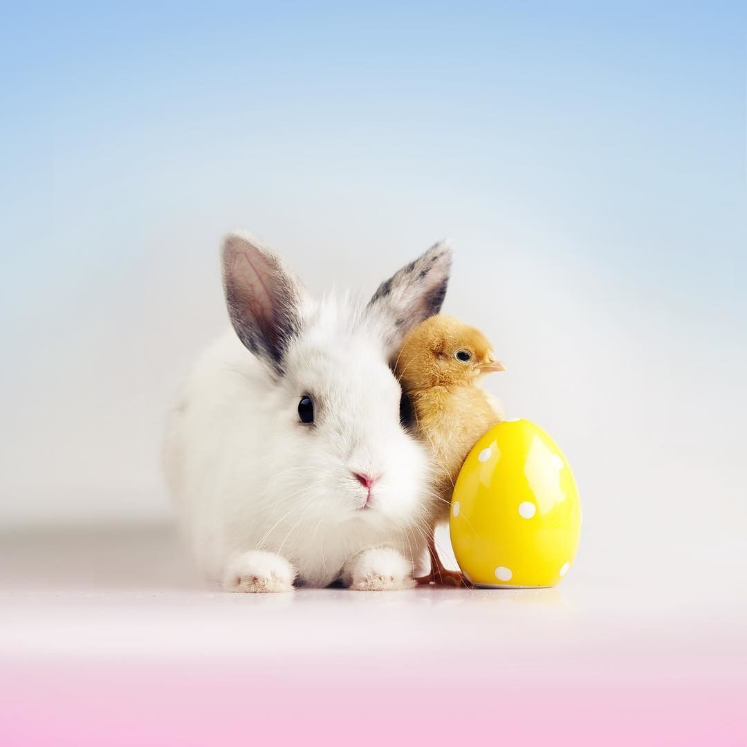 Egg Easter Colourful Holiday Beautiful Amazing Wallpaper Bunny Rabbit Cute Chicken Baby Easter Wallpaper Rabbit Wallpaper Cute Easter Pictures