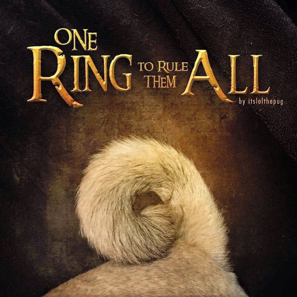 Pinterest Pug Ring To Rule
