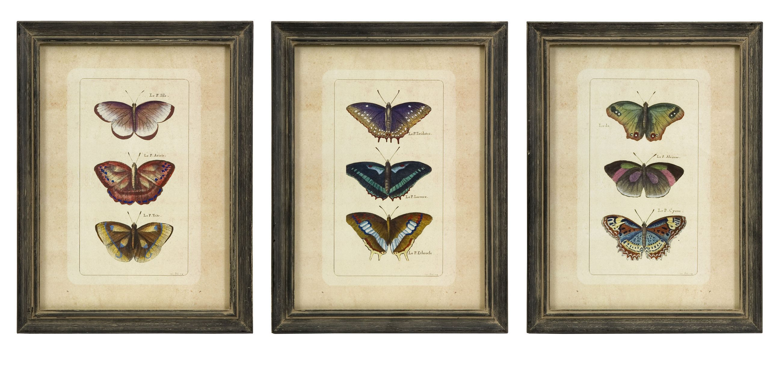 Butterfly collection wall art set of 3 products pinterest butterfly collection wall art set of 3 jeuxipadfo Gallery