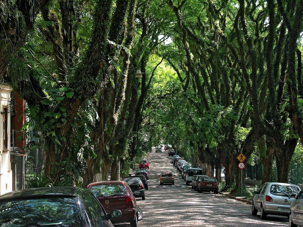 Porto Alegre, Brazil | Túnel de árvore