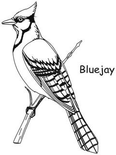 Bluejay Jpg 240 320 Pixels Bird Coloring Pages Coloring Pages Bird Drawings