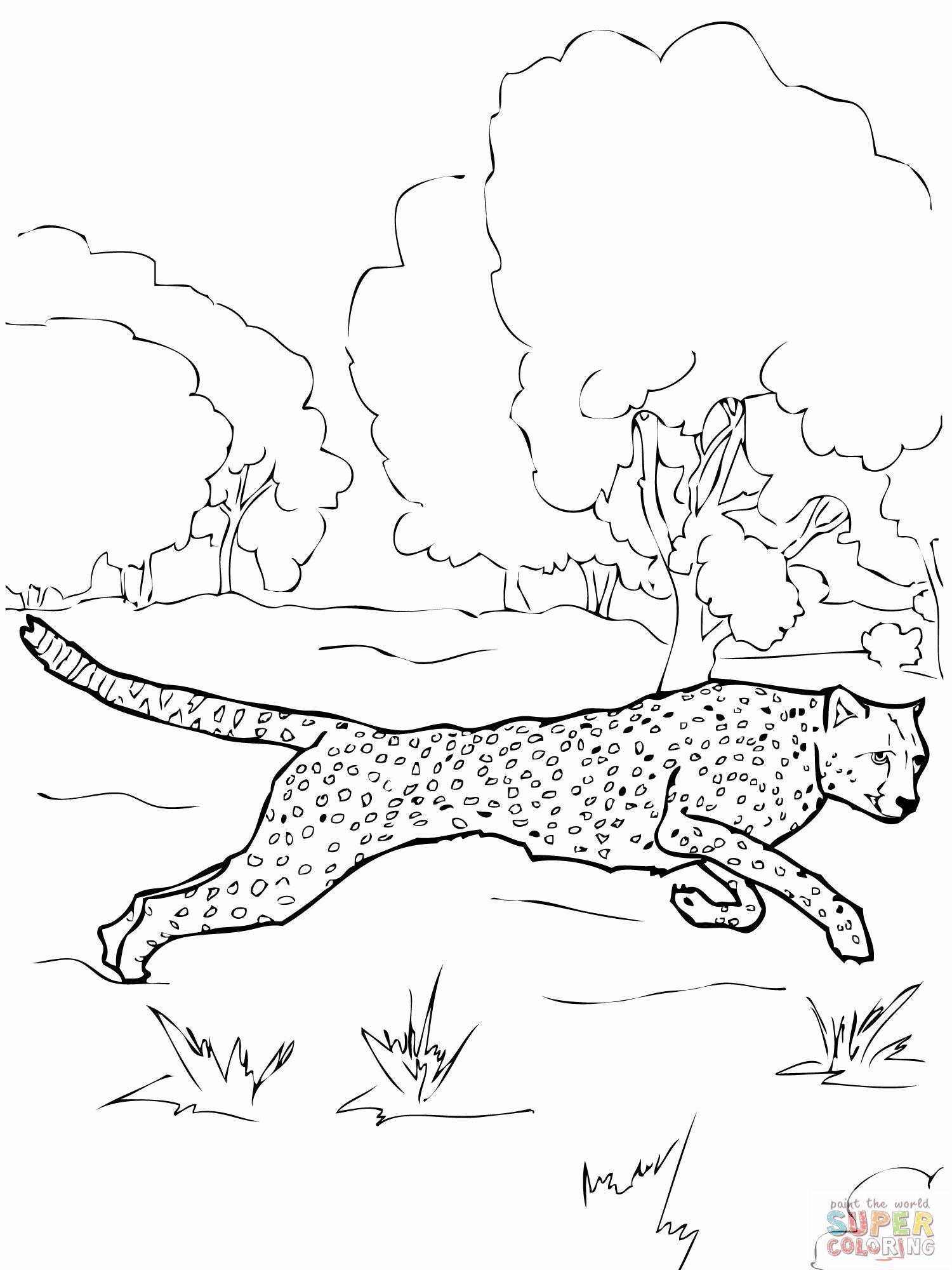 Cheetah coloring page | C is for | Pinterest | Lugares para visitar ...