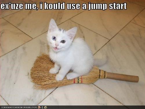 Ex Uze Me Cat Memes Cats Crazy Cats