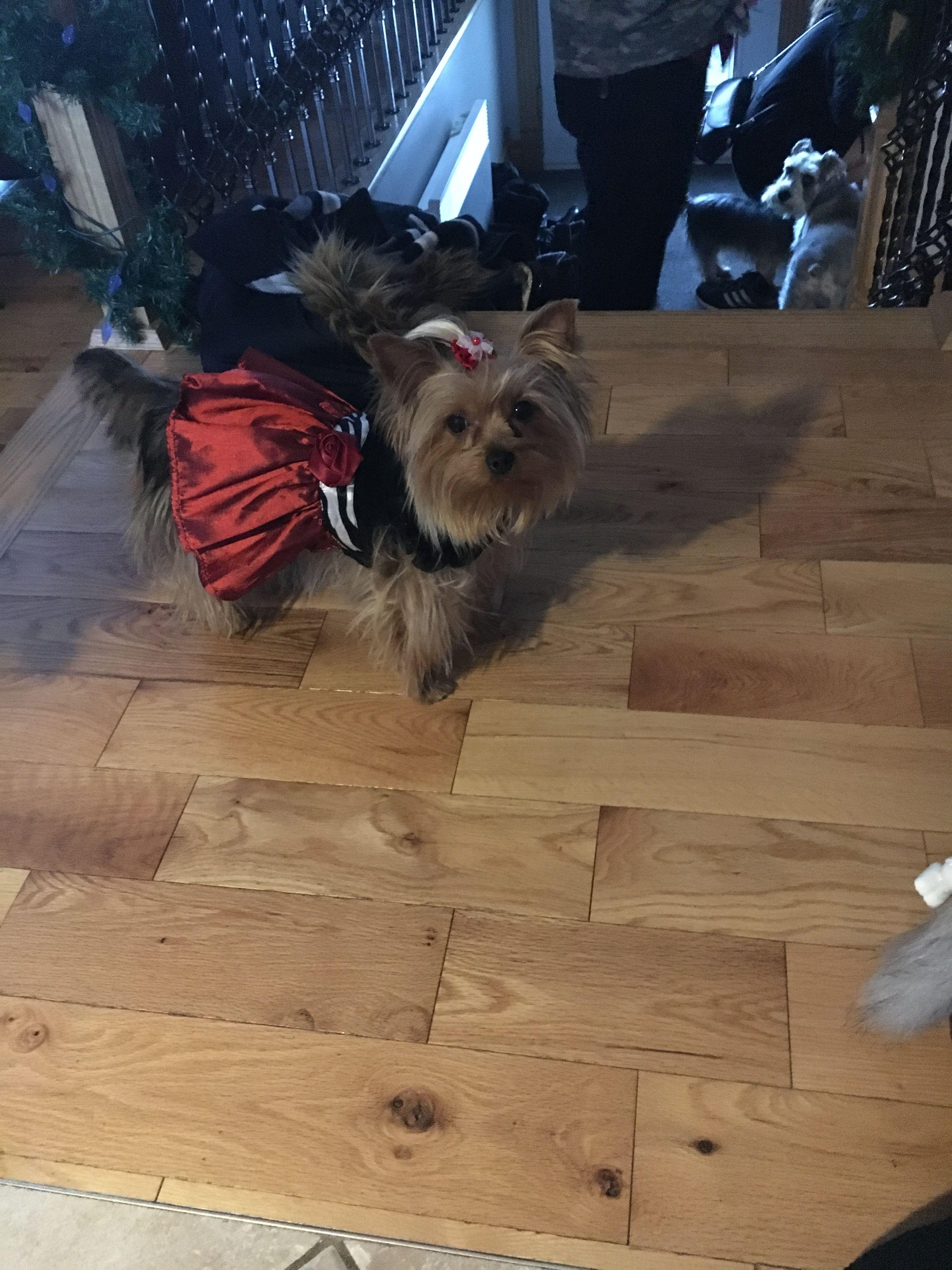 Puppy delivery service pennsylvania