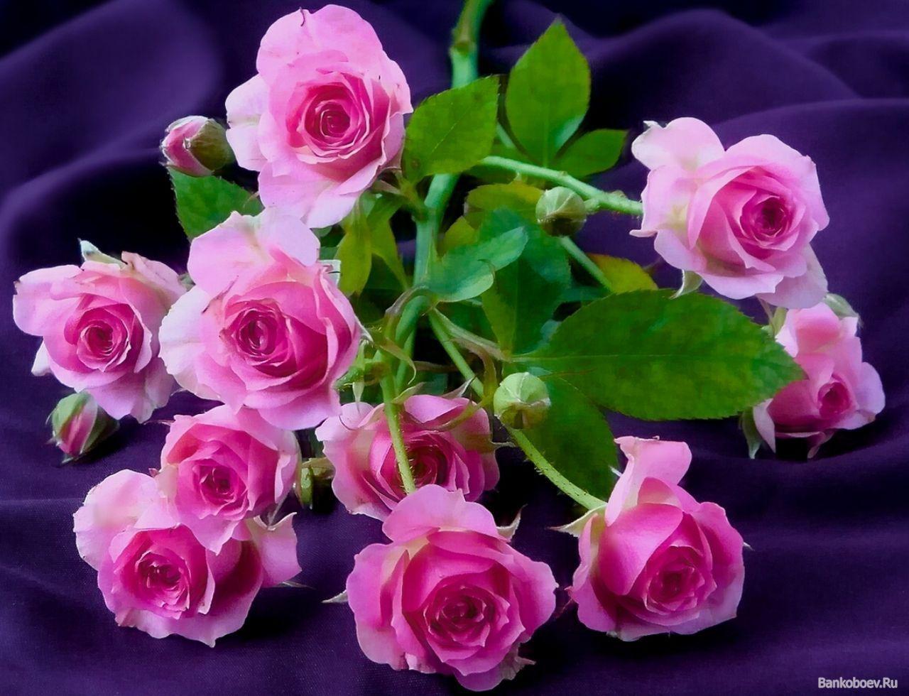 Фото красивых цветов от души