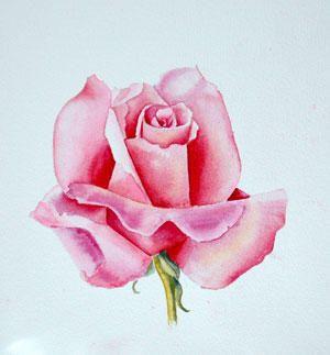 Watercolor Rose With Liz Miller Cda Rosas Pintadas Arte De Acuarela Arte De Ilusion