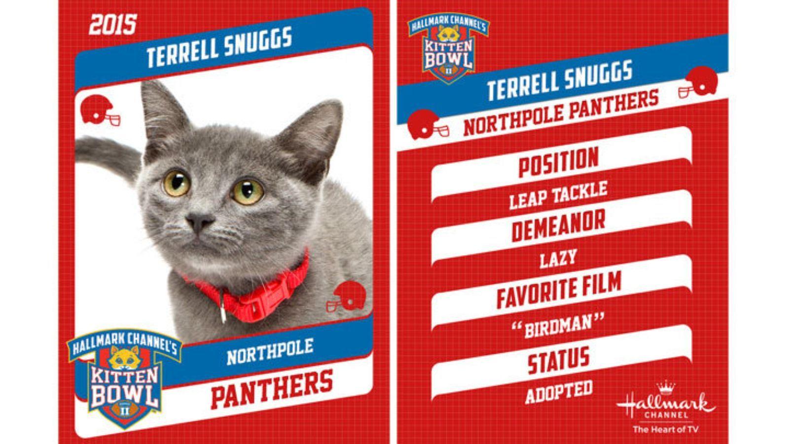 The Kitten Bowl Kittens Are Named After Nfl Stars Kitten Bowls Kitten Bowl