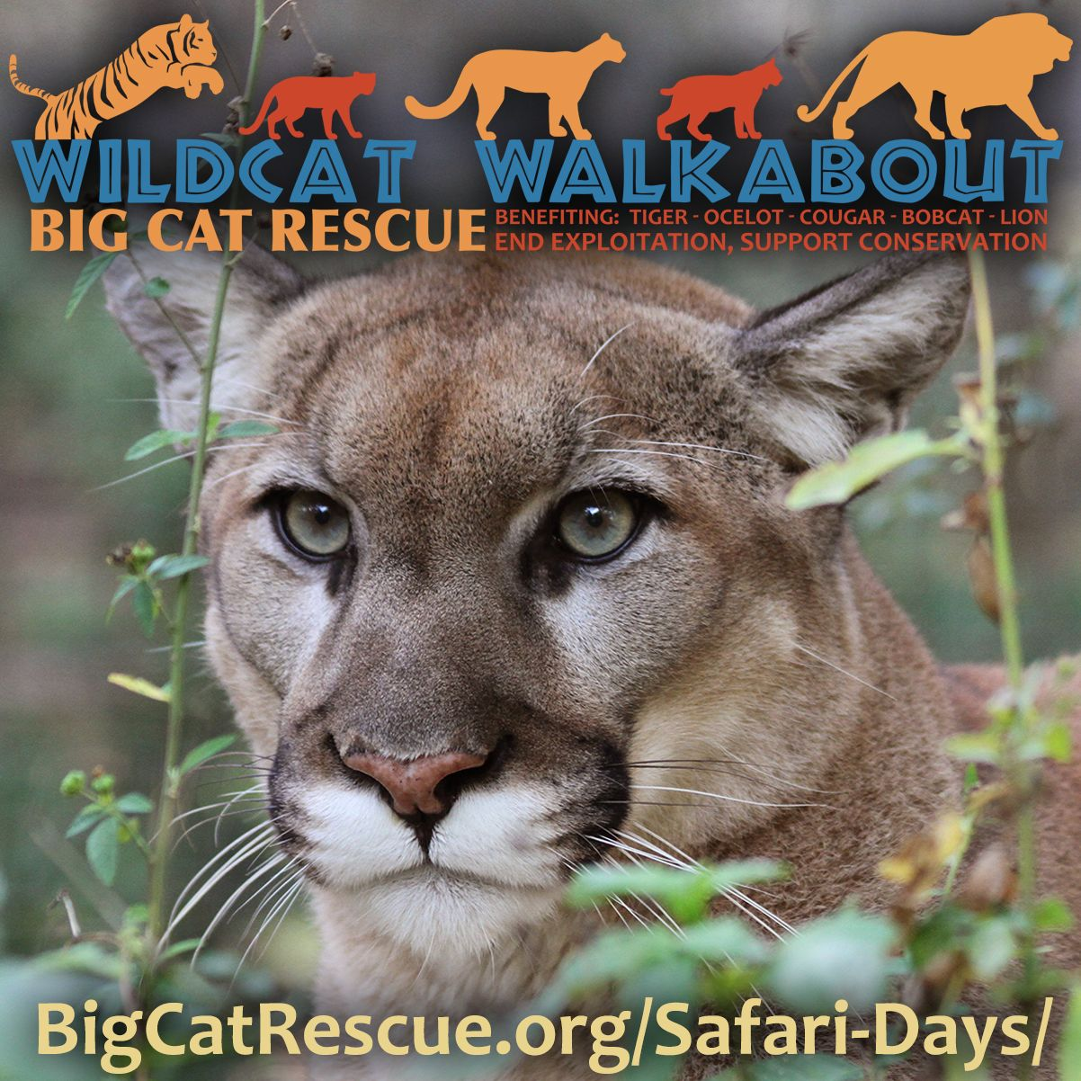 Celebrate Big Cat Rescue s 25th Year of Saving Exotic