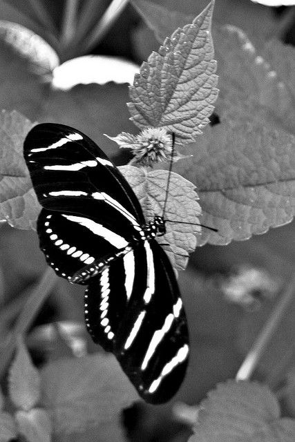 Butterfly's always warm a space, even in black and white.