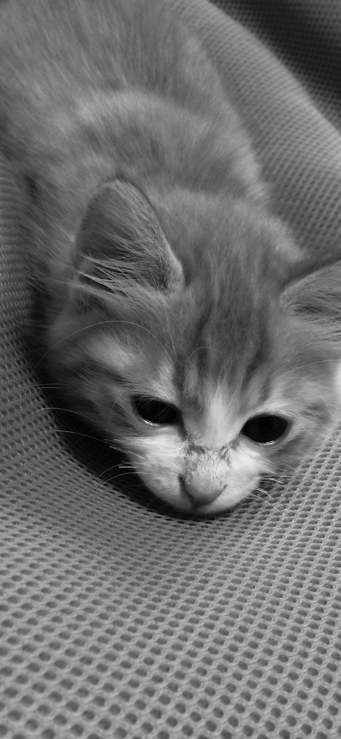 Cute Cat Pet Animal Dark Bed At Ease Iphone X Wallpapers Cute