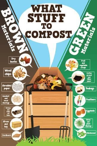 'A Vector Illustration of What Stuff to Compost Infographic' Art Print - Artisticco LLC | Art.com