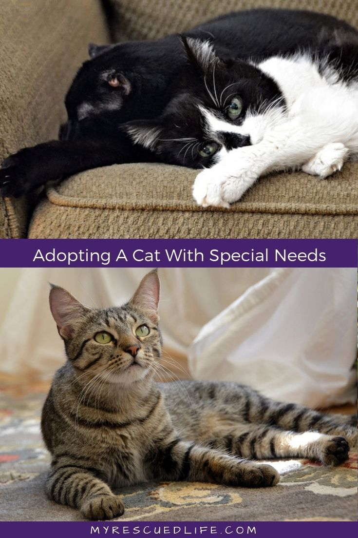 Have you considered adopting a cat with special needs