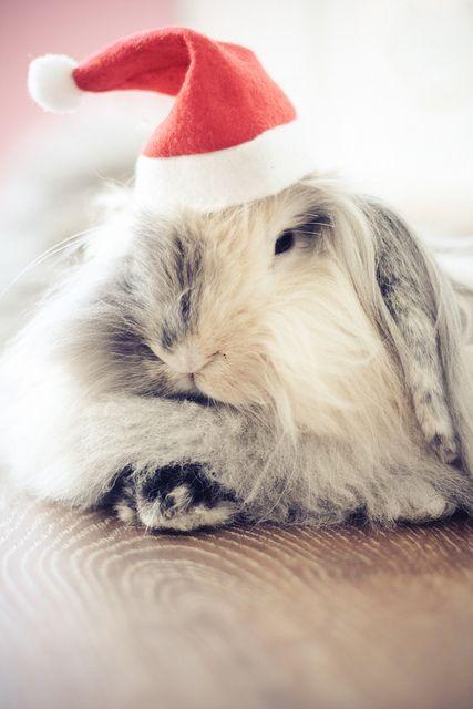 #cute #rabbit